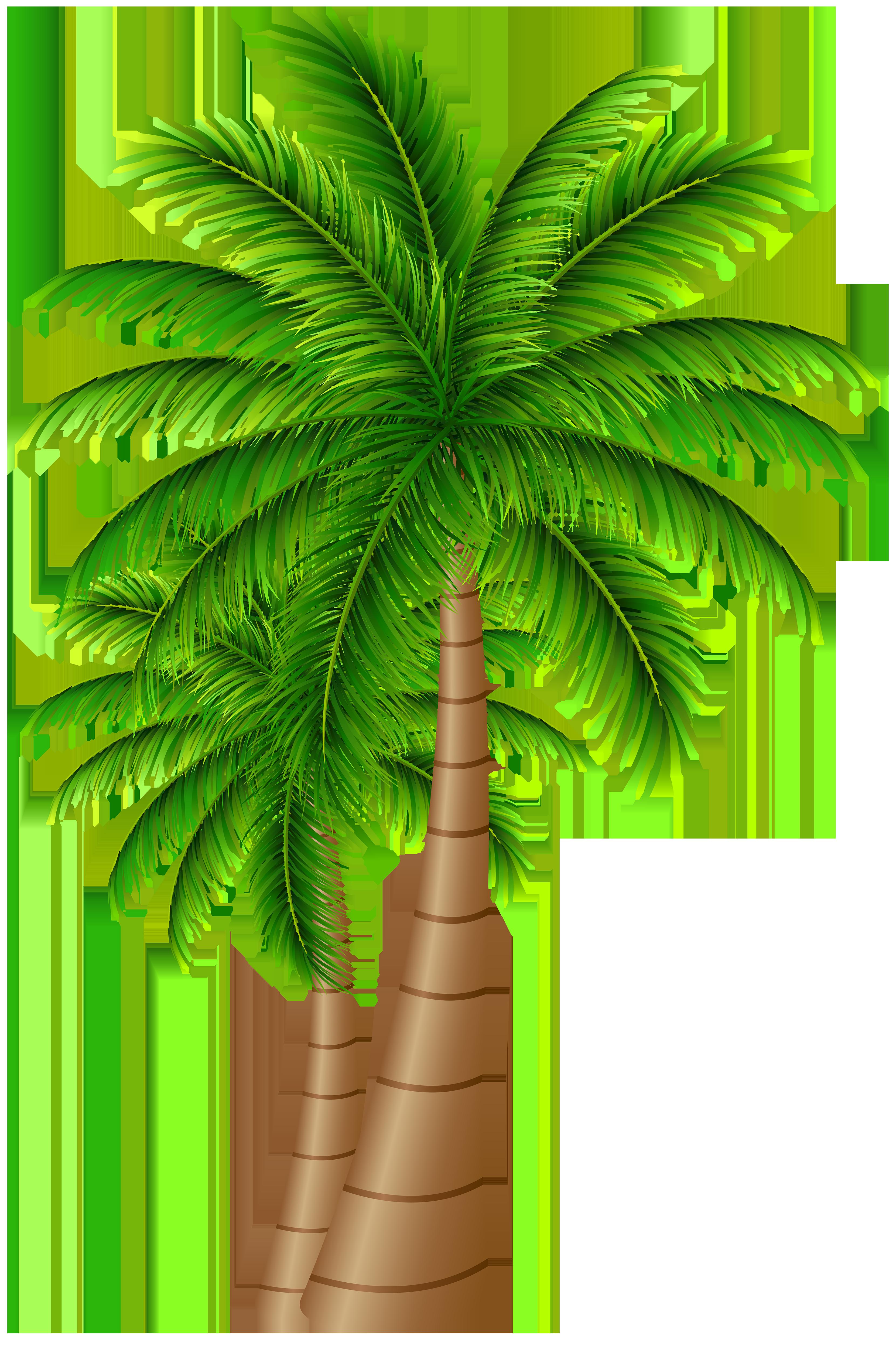 Clipart png palm tree, Clipart png palm tree Transparent ...