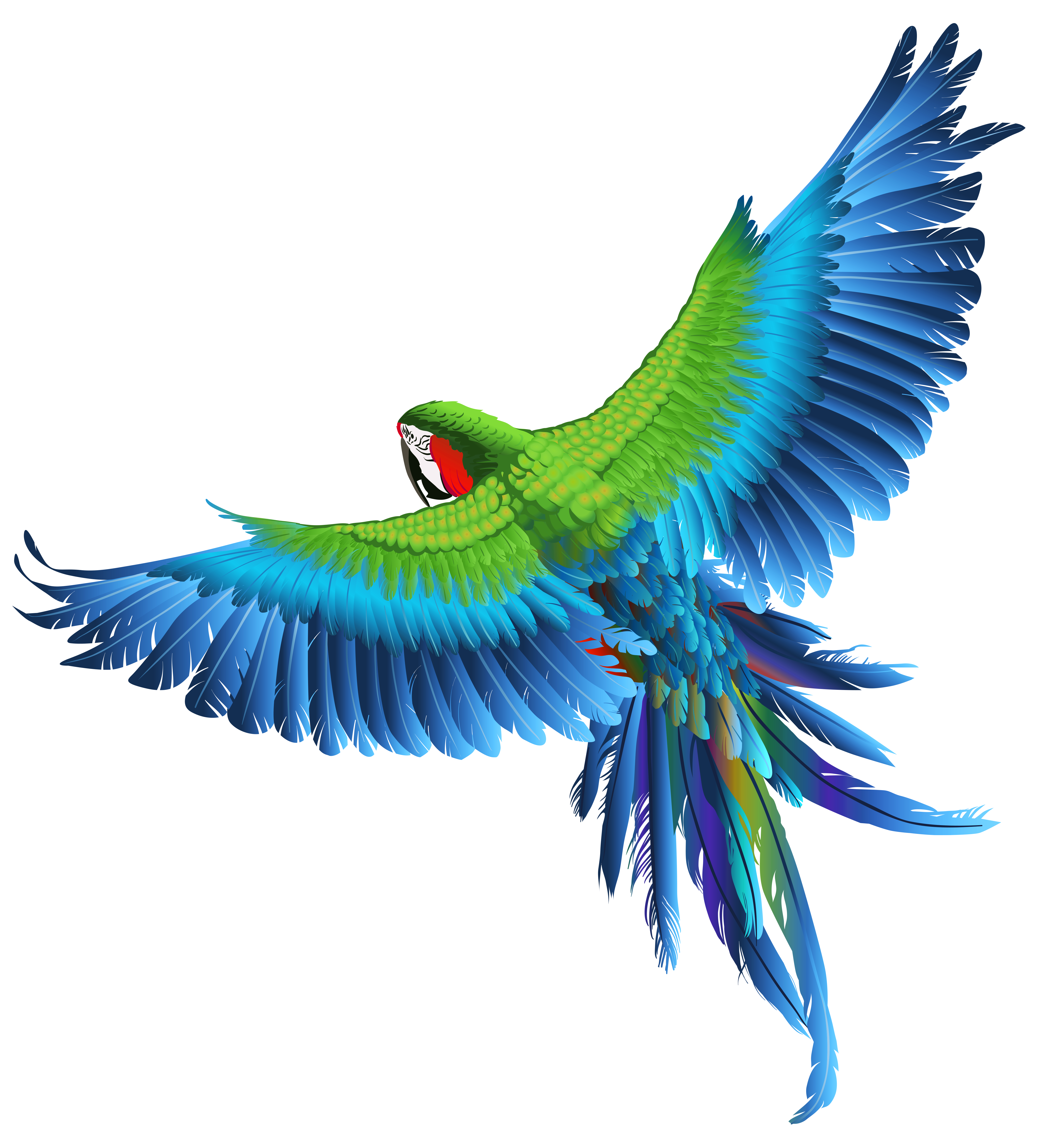 Parrot clipart bird's. Transparent picture gallery yopriceville