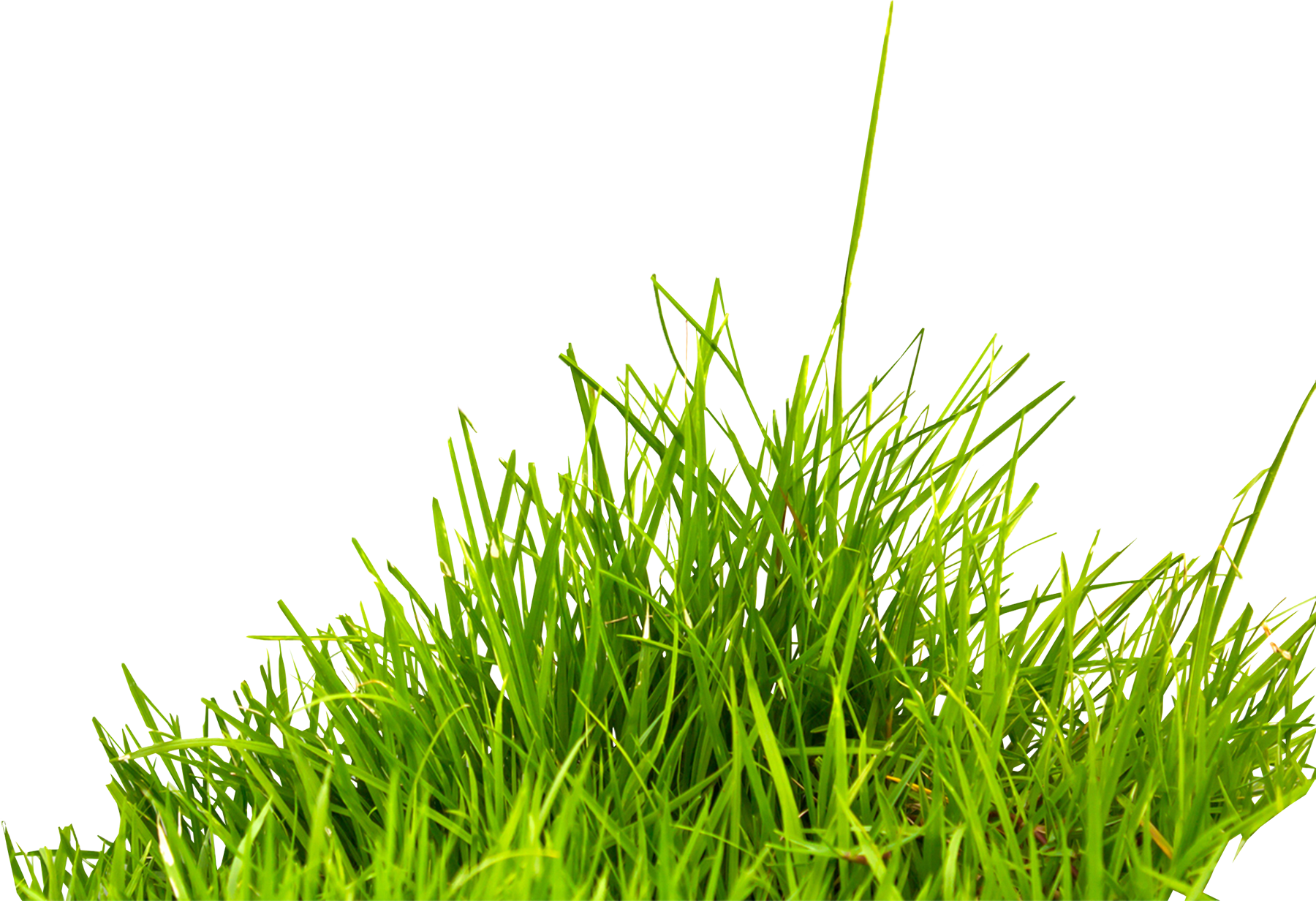 Grass png images. Transparent pluspng image green