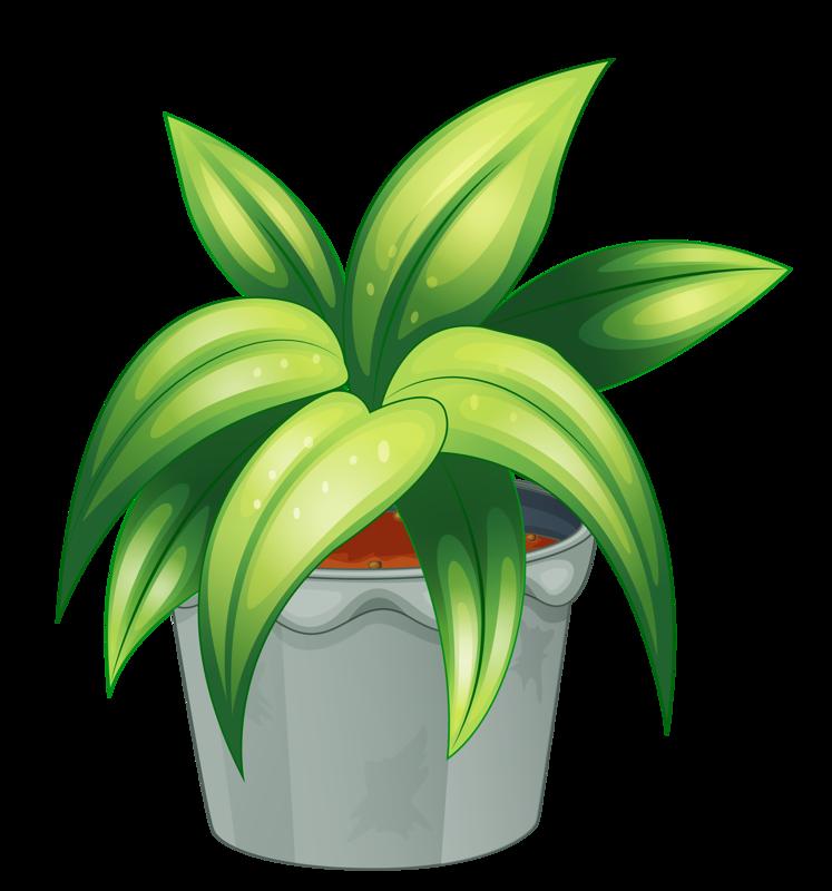 Plants clipart house plant. Flower pot png my