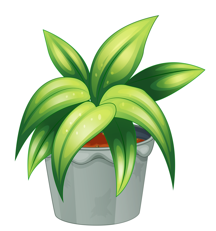Plant clipart terrestrial plant. Flower pot png my
