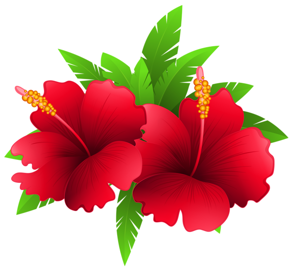 Exotic flowers and plant. Poppy clipart 5 flower