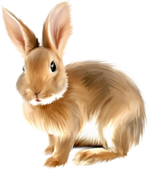 Painted bunny a d. Clipart png rabbit