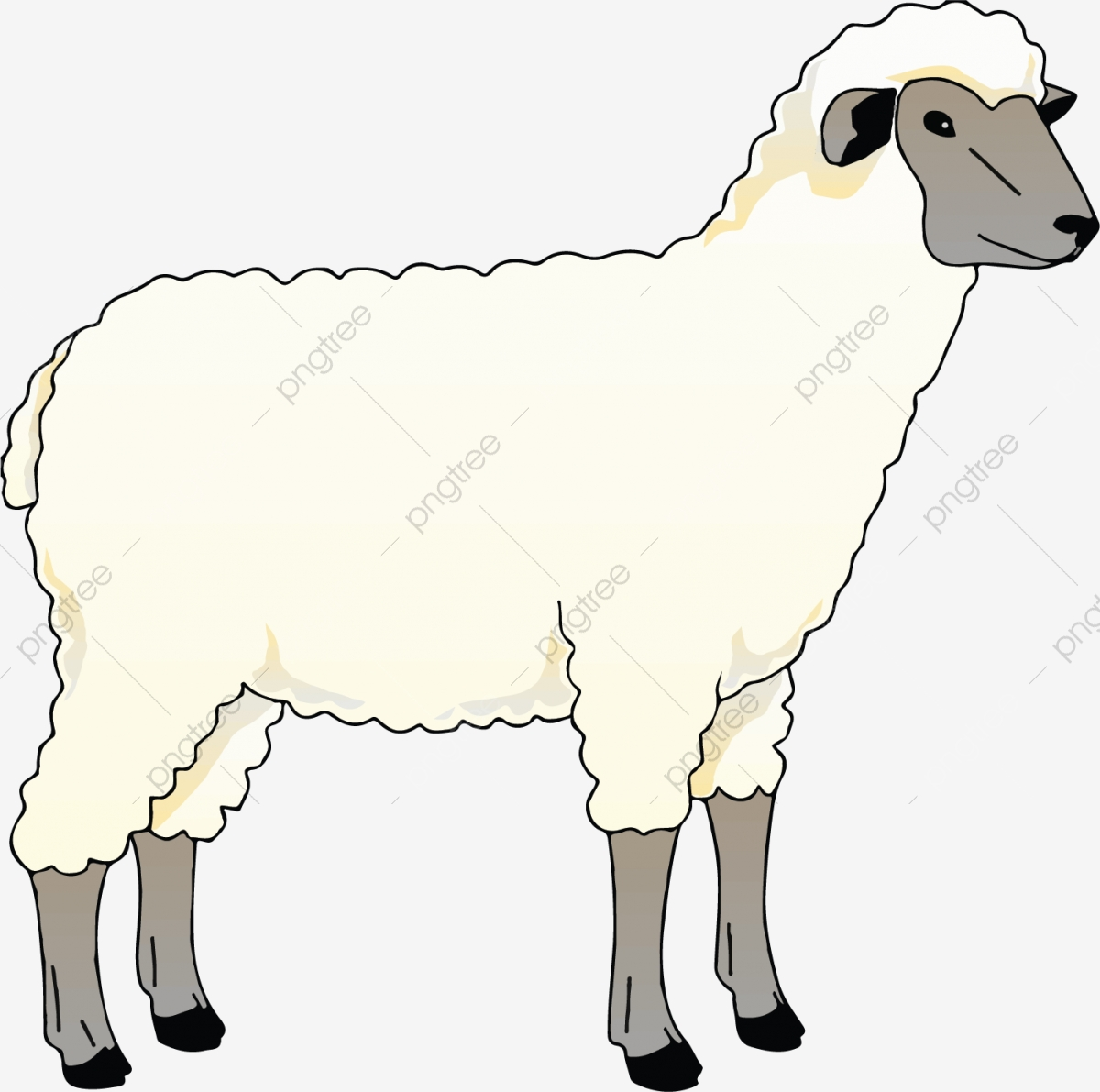 Lamb clipart vector. Sheep cartoon png and