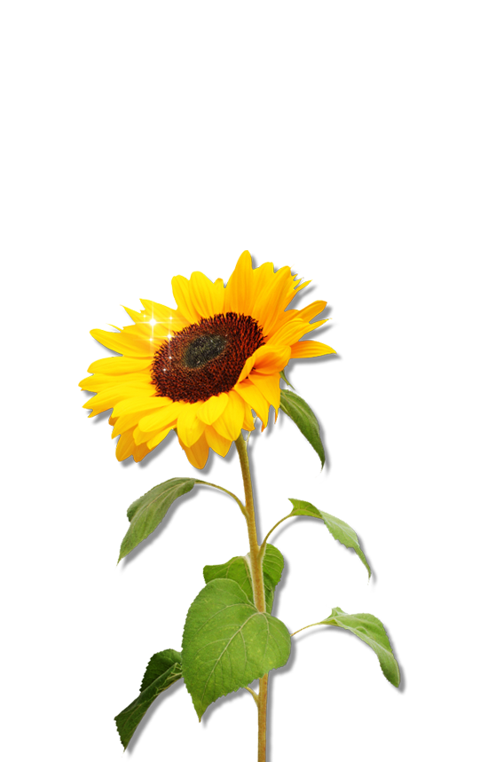 Tree clipart sunflower. Png download free icons