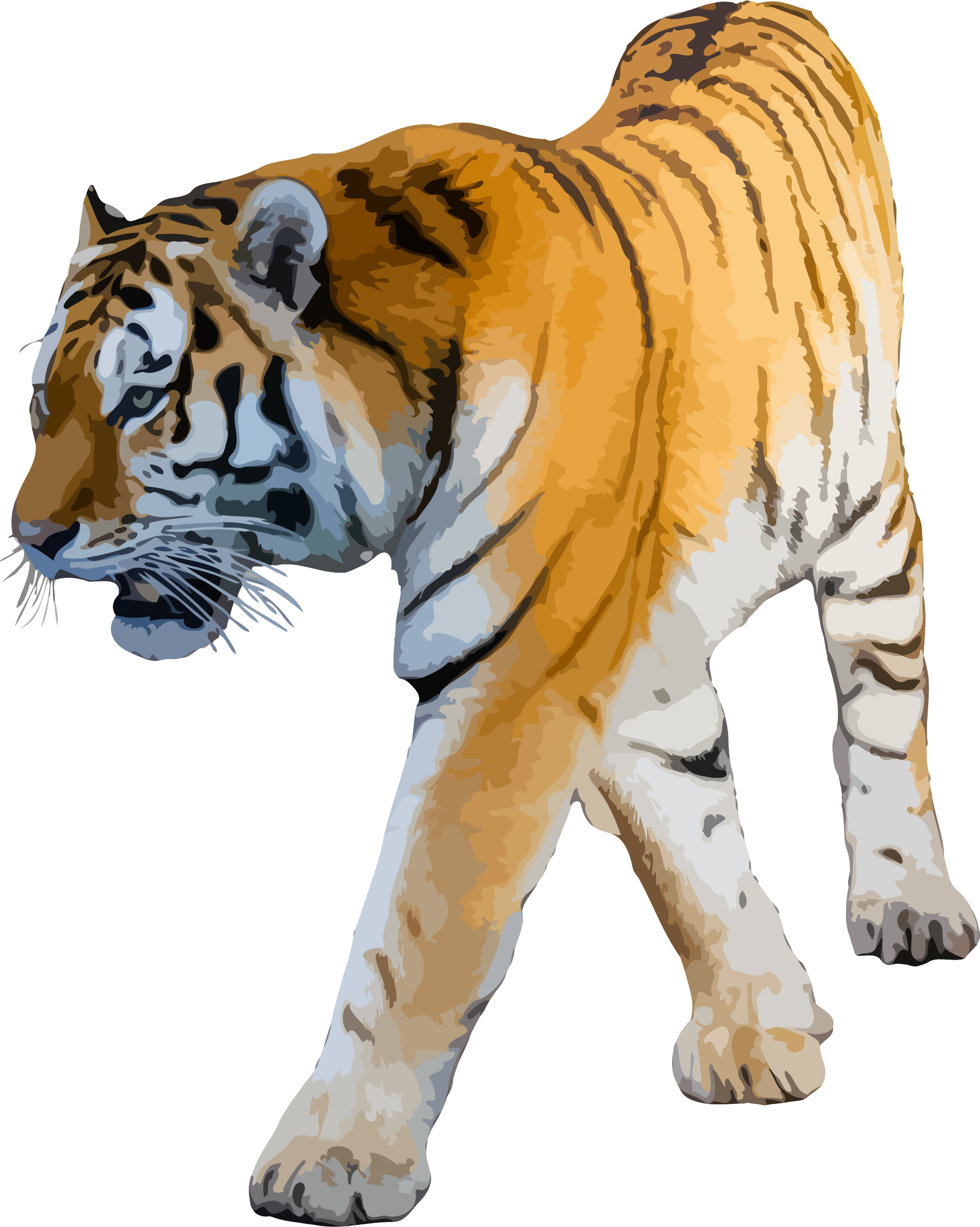 Felidae white siberian clip. Clipart tiger bengal tiger