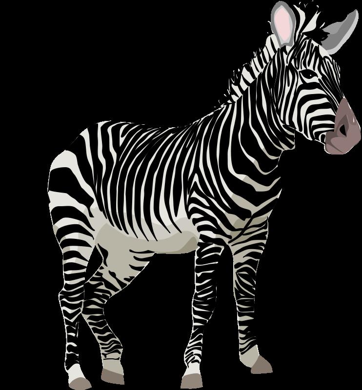 Free stock photo illustration. Clipart png zebra