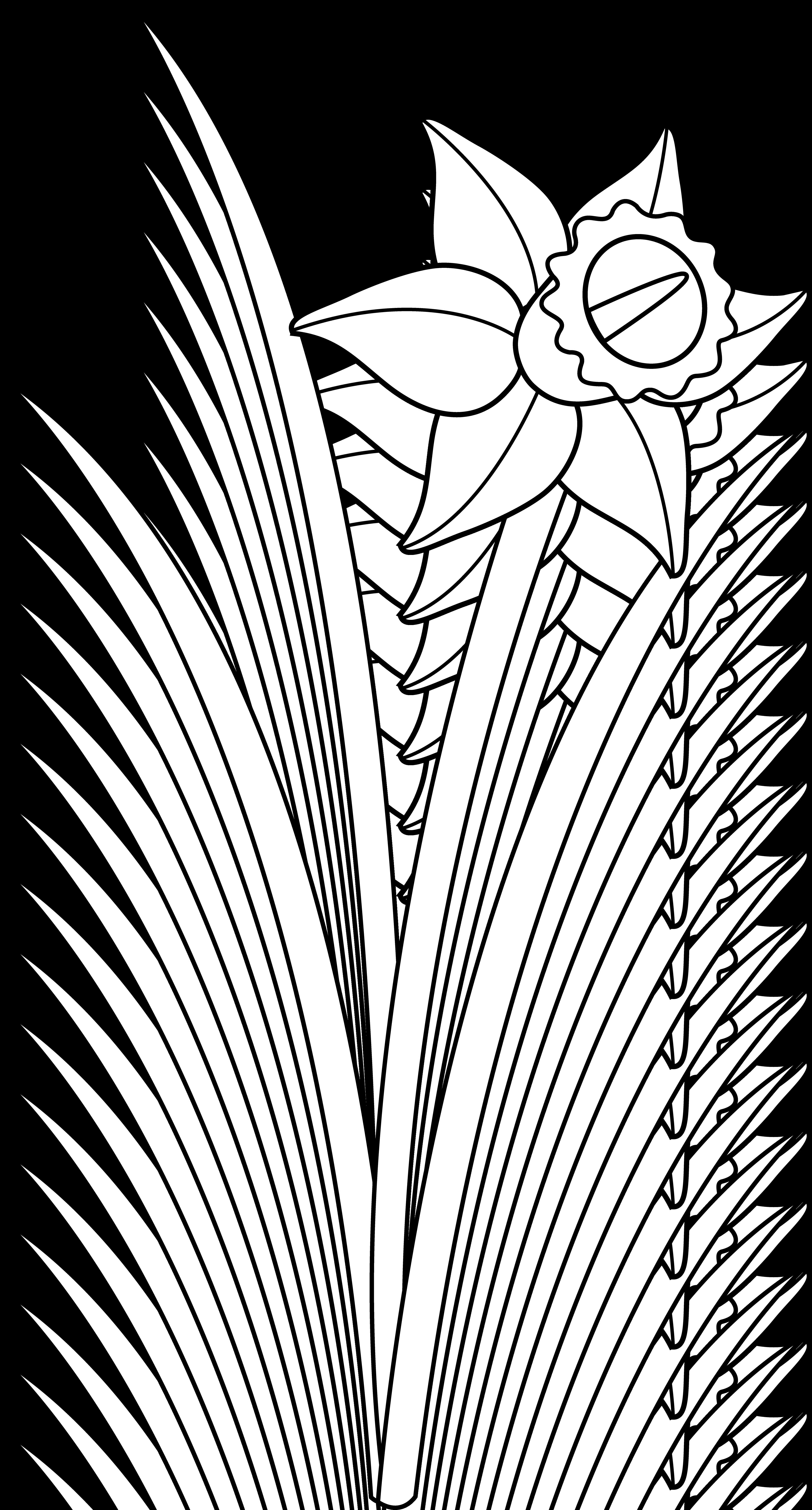 Daffodil line . Flower clipart outline