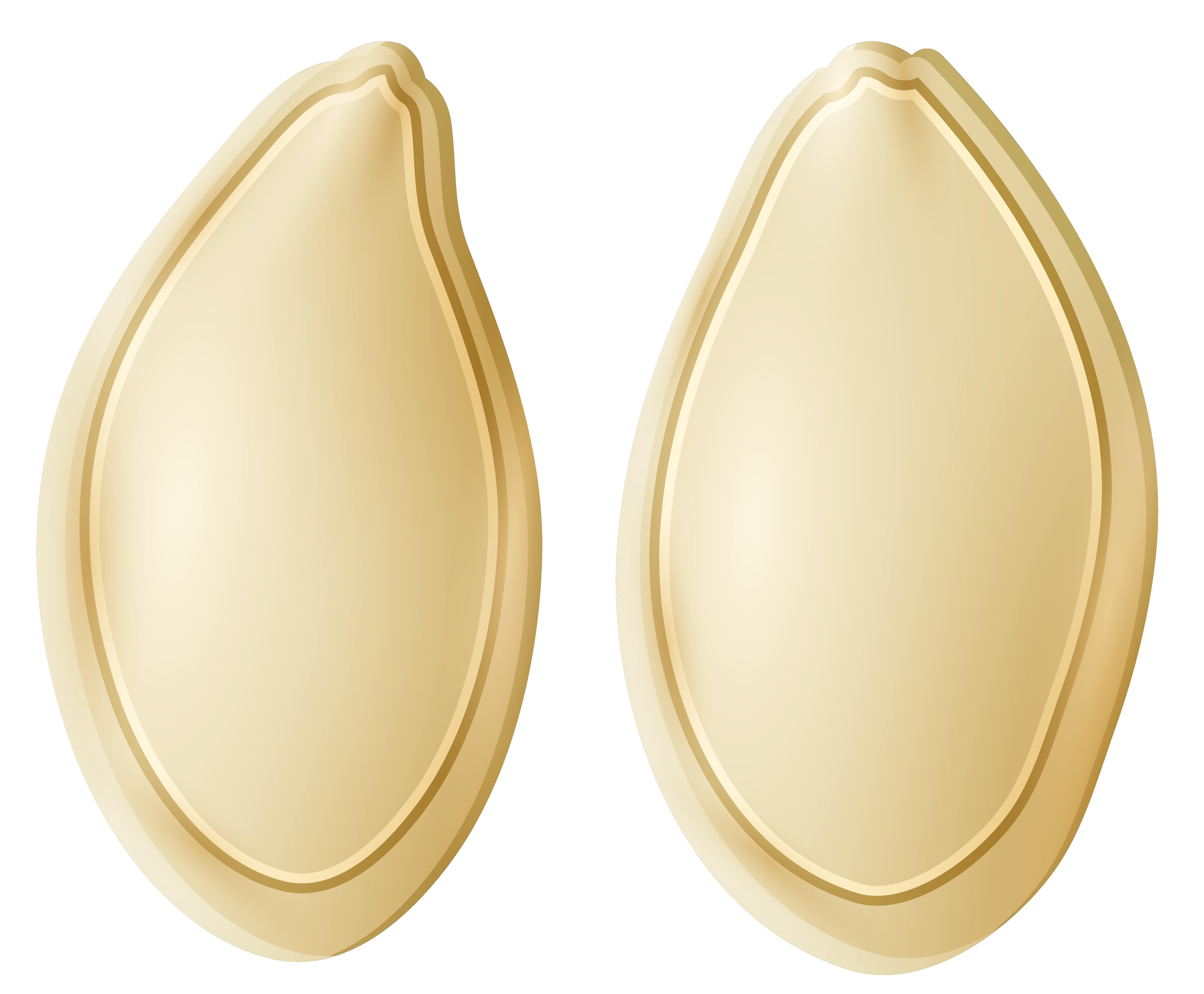 Seeds png clip art. Pumpkin clipart oval