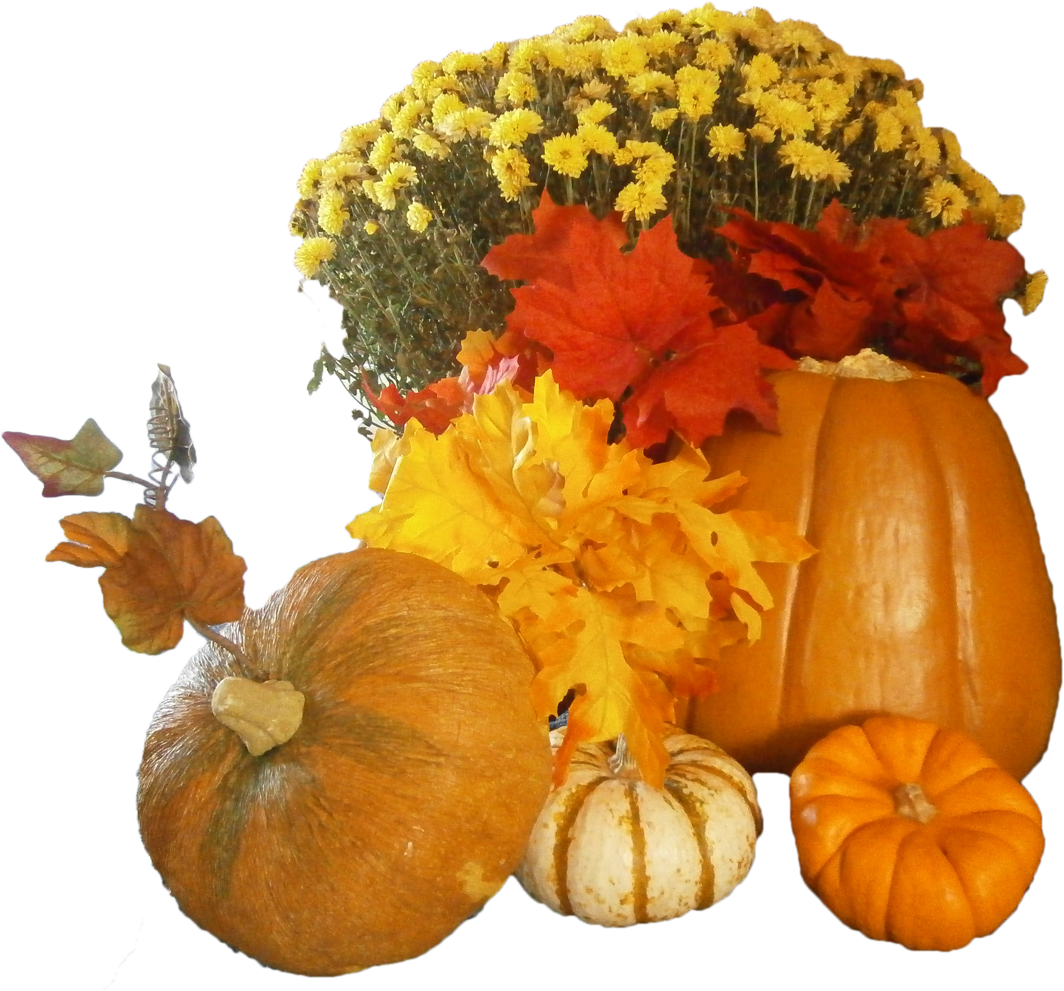 Free day png images. Clipart pumpkin thanksgiving