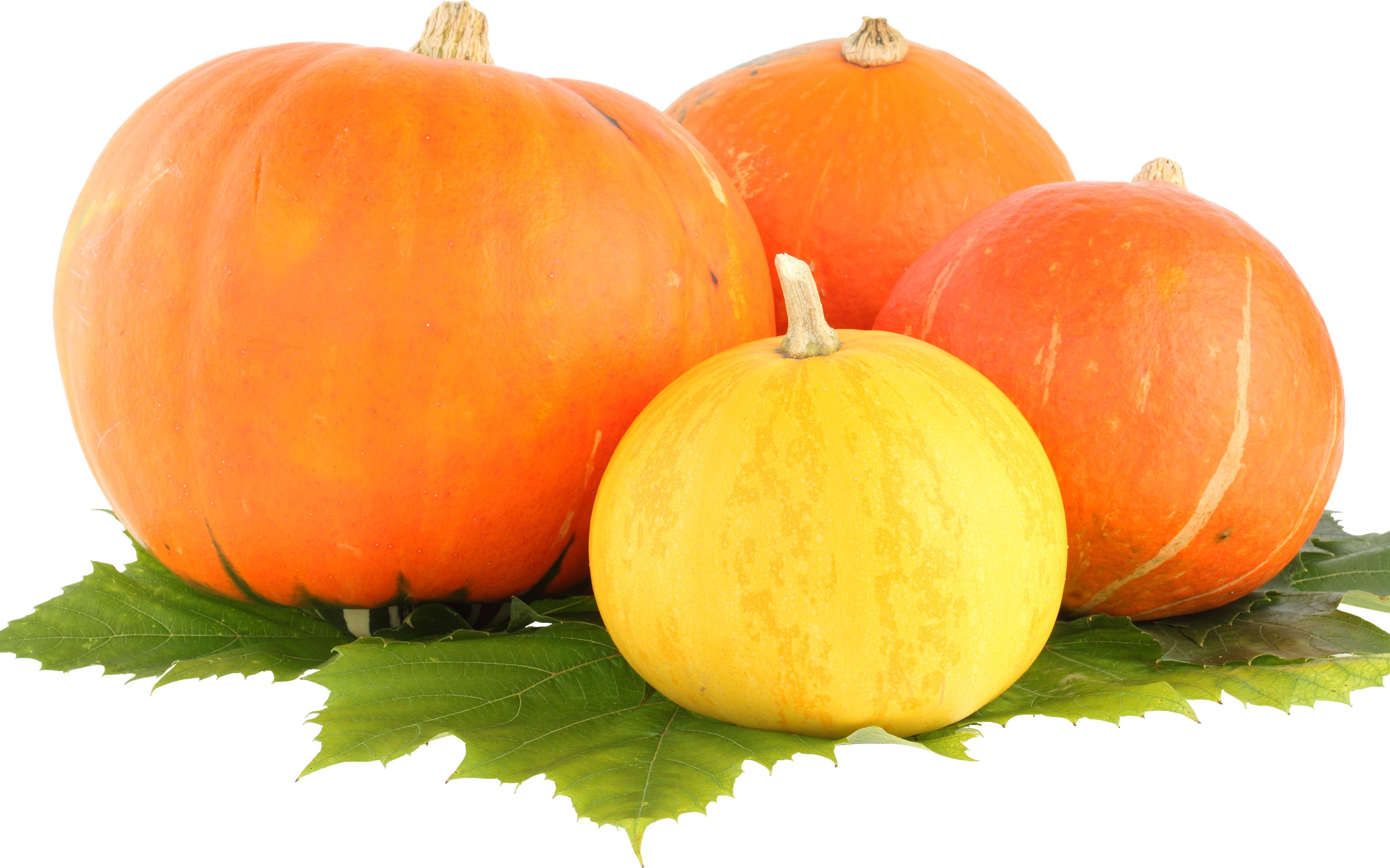 Png images free download. Clipart pumpkin vegetable
