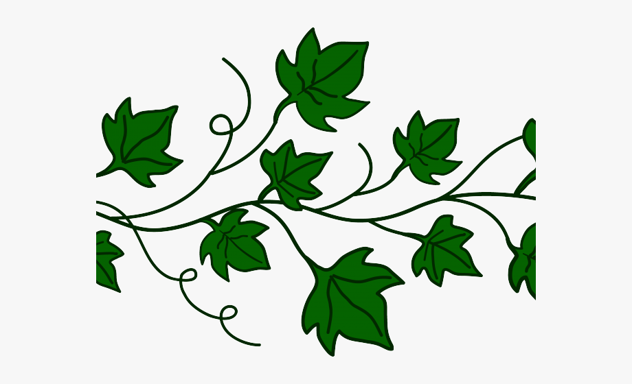 Vines clipart vine plant. Pumpkin free cliparts on