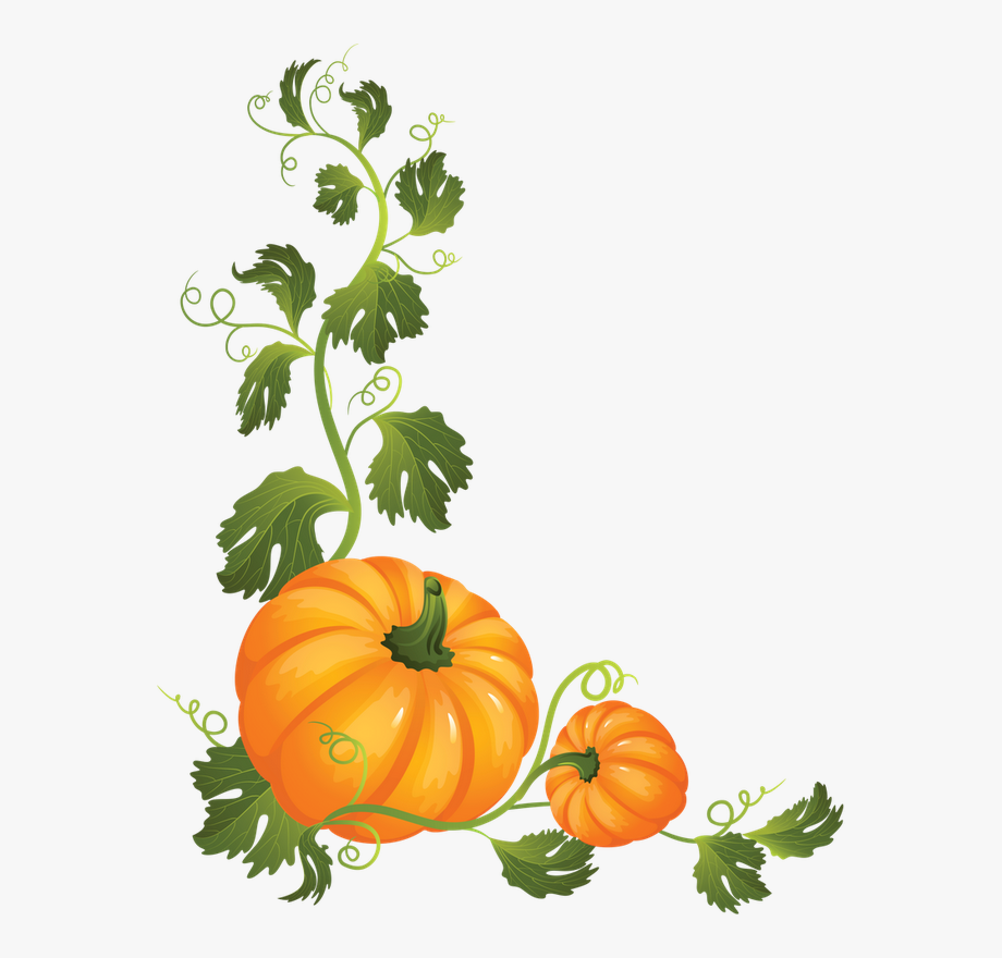 Discover ideas about on. Pumpkin clipart vine