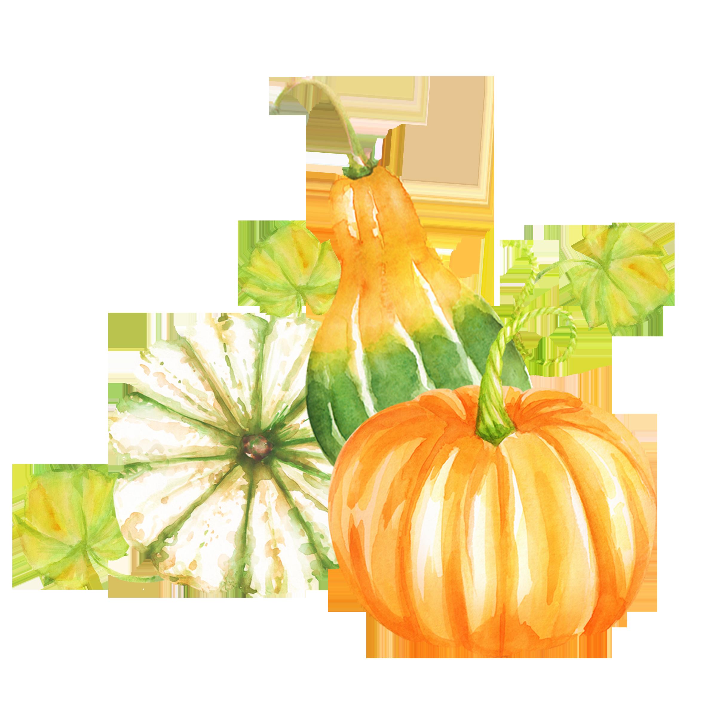 Action de grace automne. Clipart pumpkin watercolor