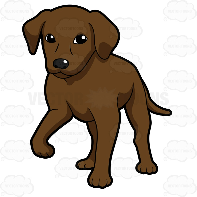 Clipart puppy chocolate lab. Free download best on