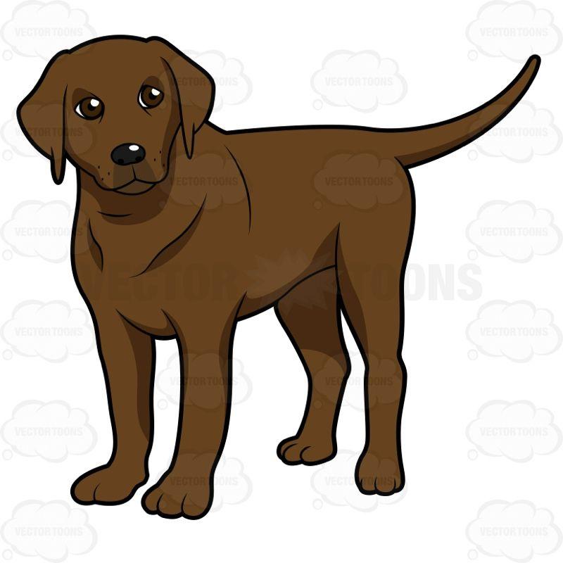 Clipart puppy chocolate lab. Young standing and looking