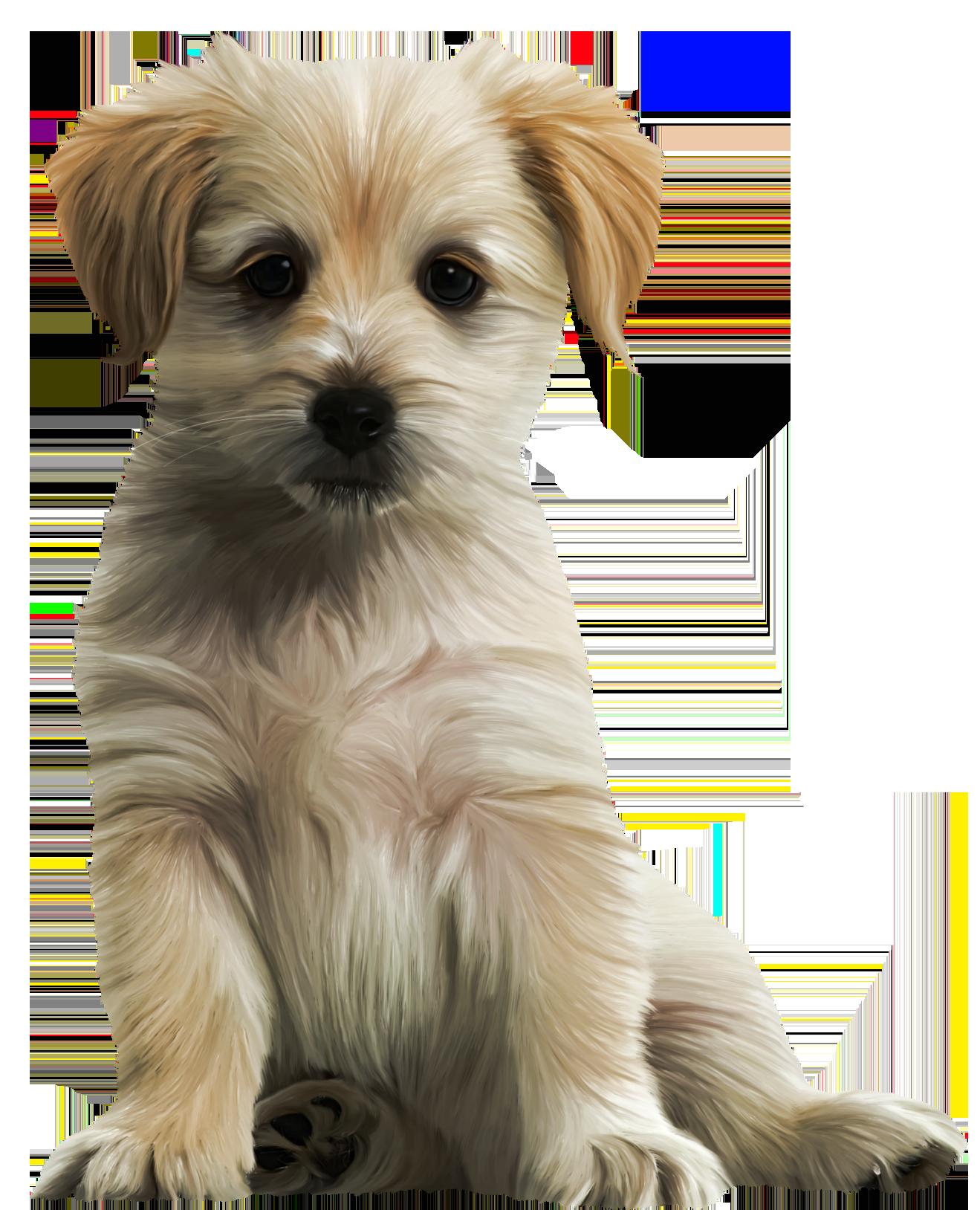 Cute puppy png image. Pet clipart companion
