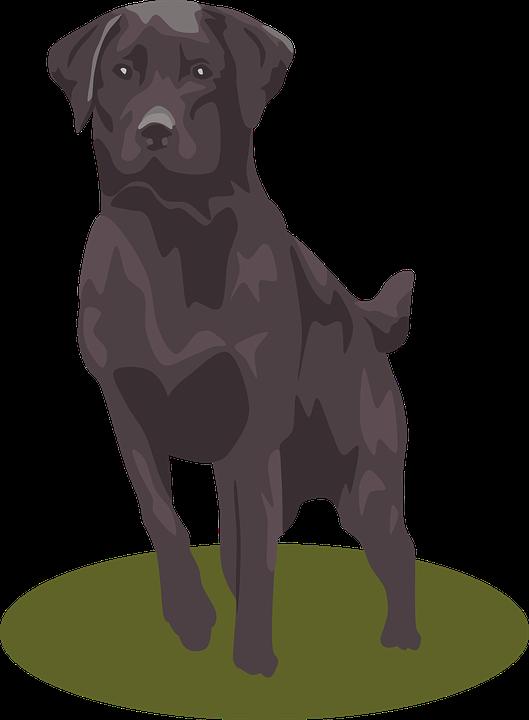 Clipart puppy golden retriever. Free labrador png transparent