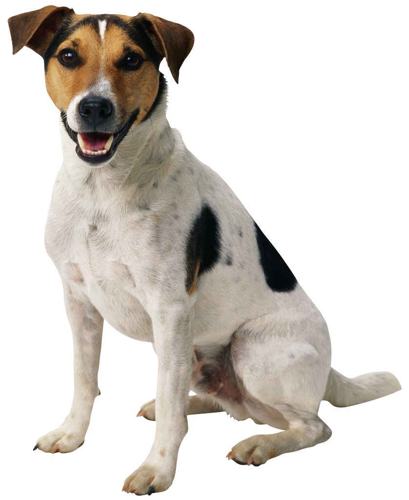 Dog png . Clipart puppy happy