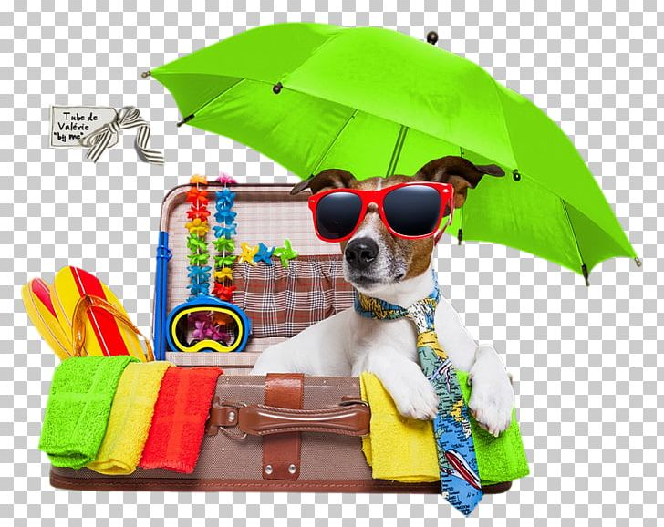 Vacation jack russell terrier. Clipart puppy holiday