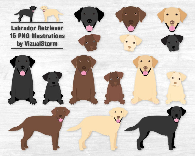 Clipart puppy labrador. Retriever black lab chocolate