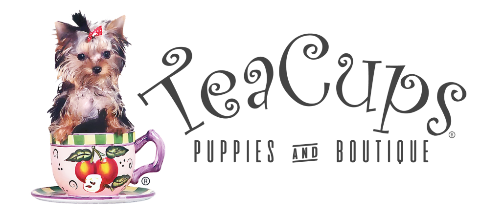 Clipart puppy maltipoo. Maltipoos at teacups puppies