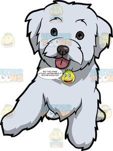 A cute dog . Clipart puppy maltipoo