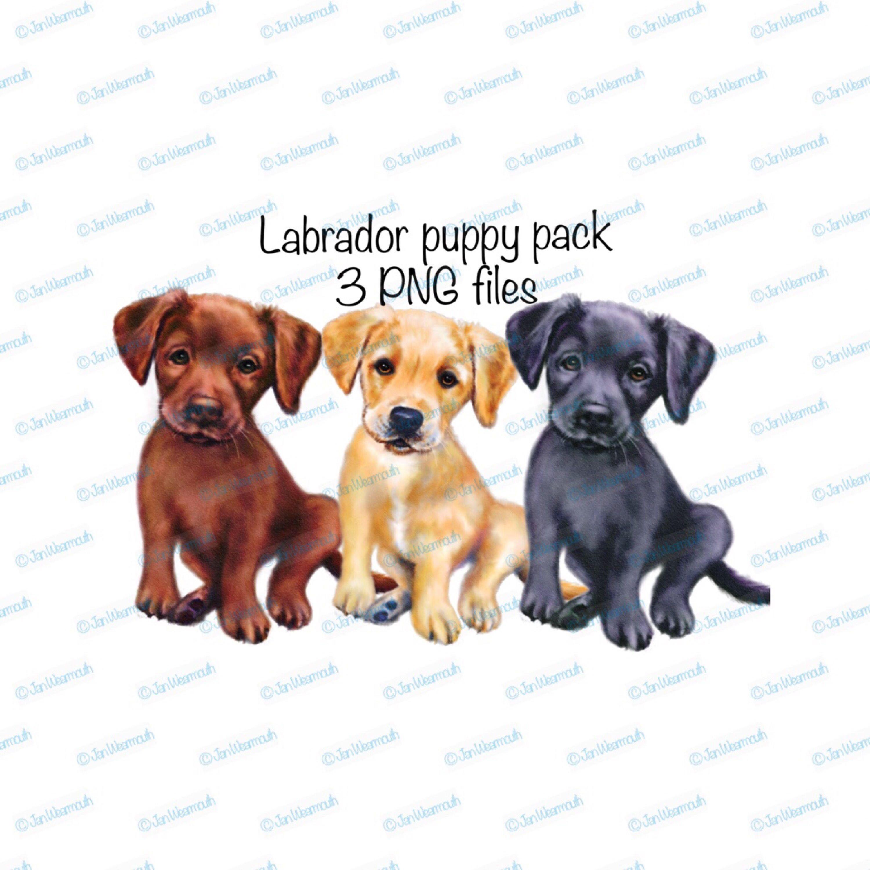 Clipart puppy printable. Dog cute puppies labrador