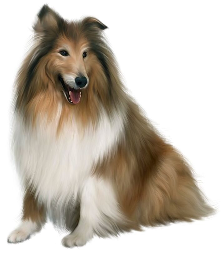 Clipart puppy realistic. Free real dog cliparts
