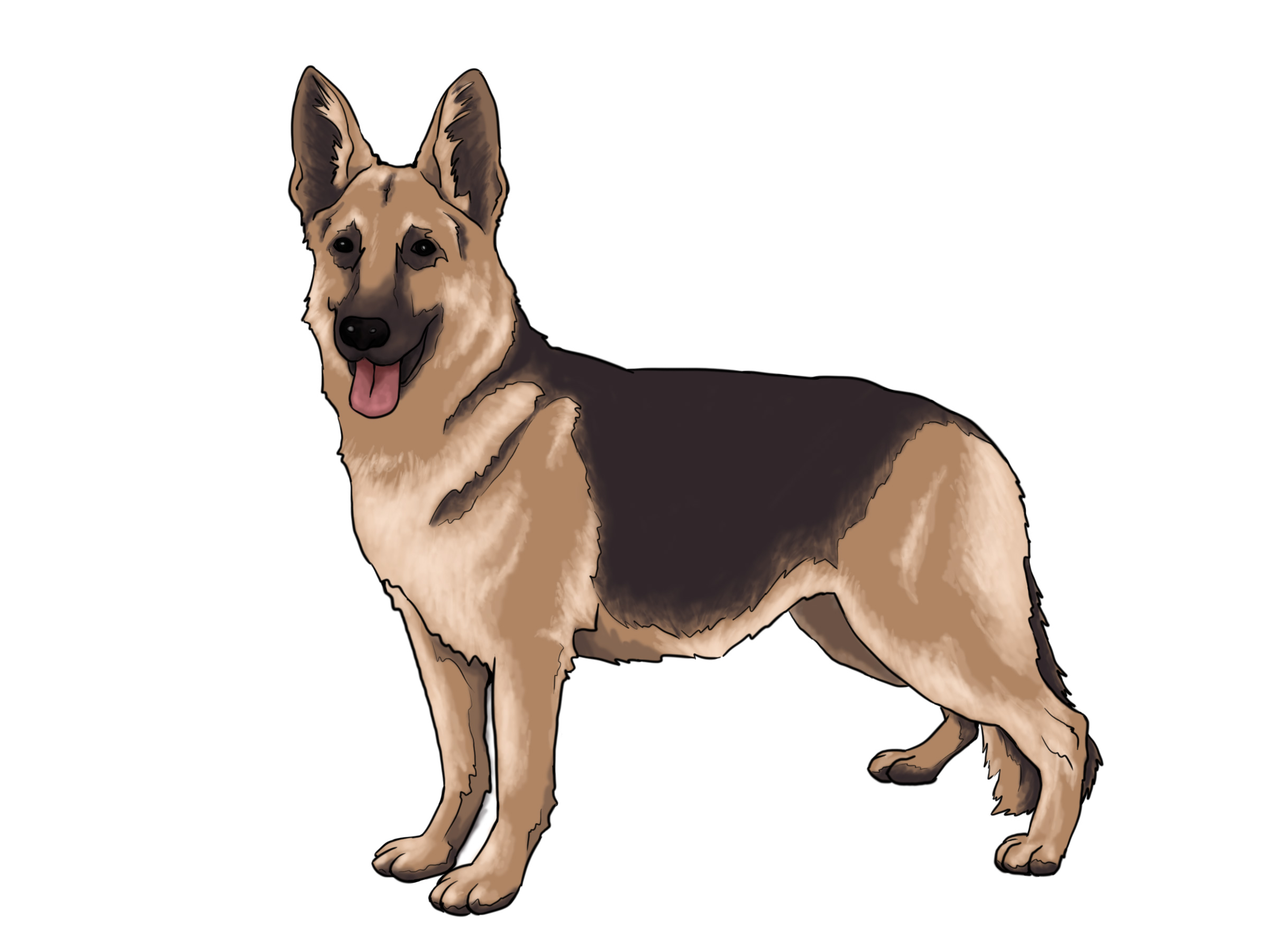 Free real dog cliparts. Clipart puppy realistic