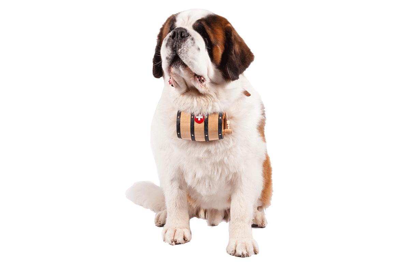 Clipart puppy st bernard. Saint sking dog minecraft