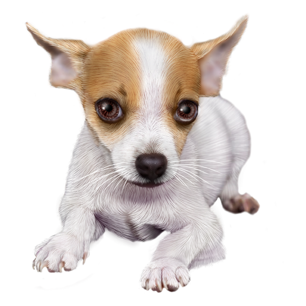 Tubes chiens cute pinterest. Fat clipart chihuahua