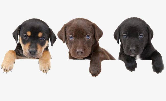 Clipart puppy three puppy. Puppies png animal color