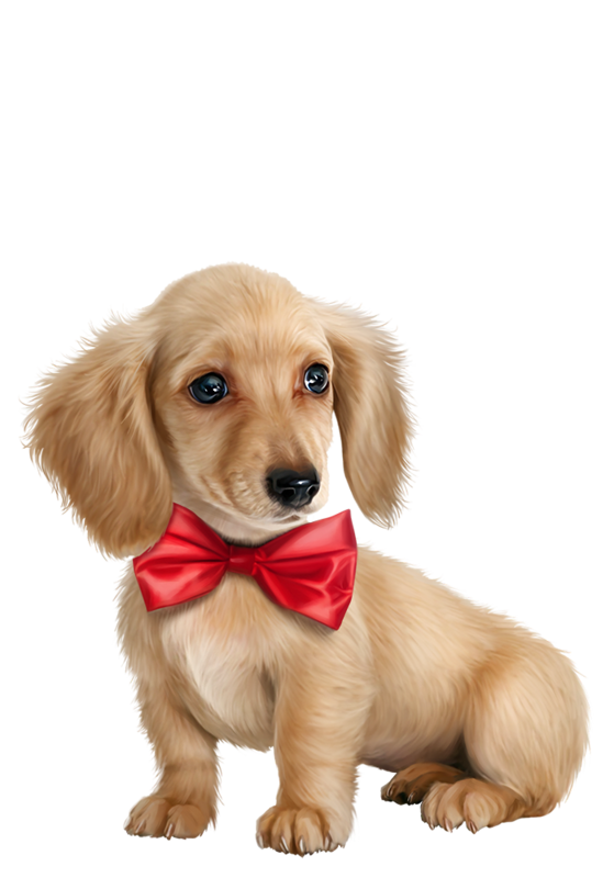 Chiens dog puppies wallpapers. Clipart puppy tiny