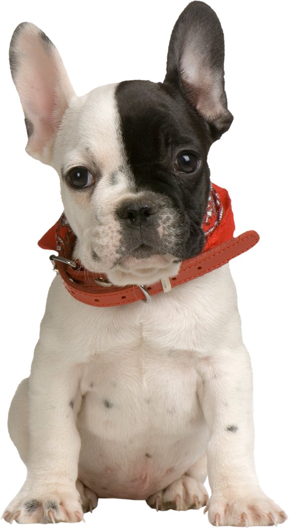 Clipart puppy transparent background. Png gallery yopriceville high