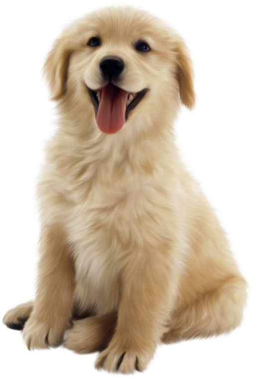 Pet clipart golden retriever puppy. Chiens dog puppies wallpapers