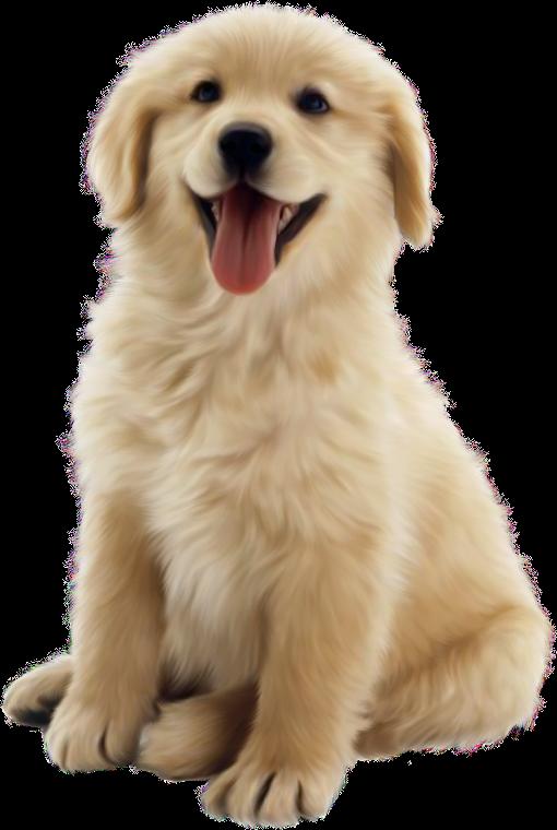 Needle clipart dog medicine. Chiens puppies wallpapers perros