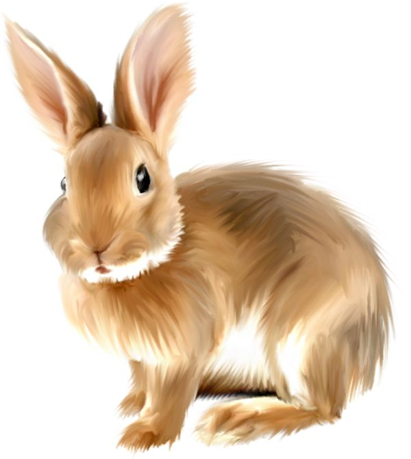 Rabbit free graphics of. Bunny clipart colored
