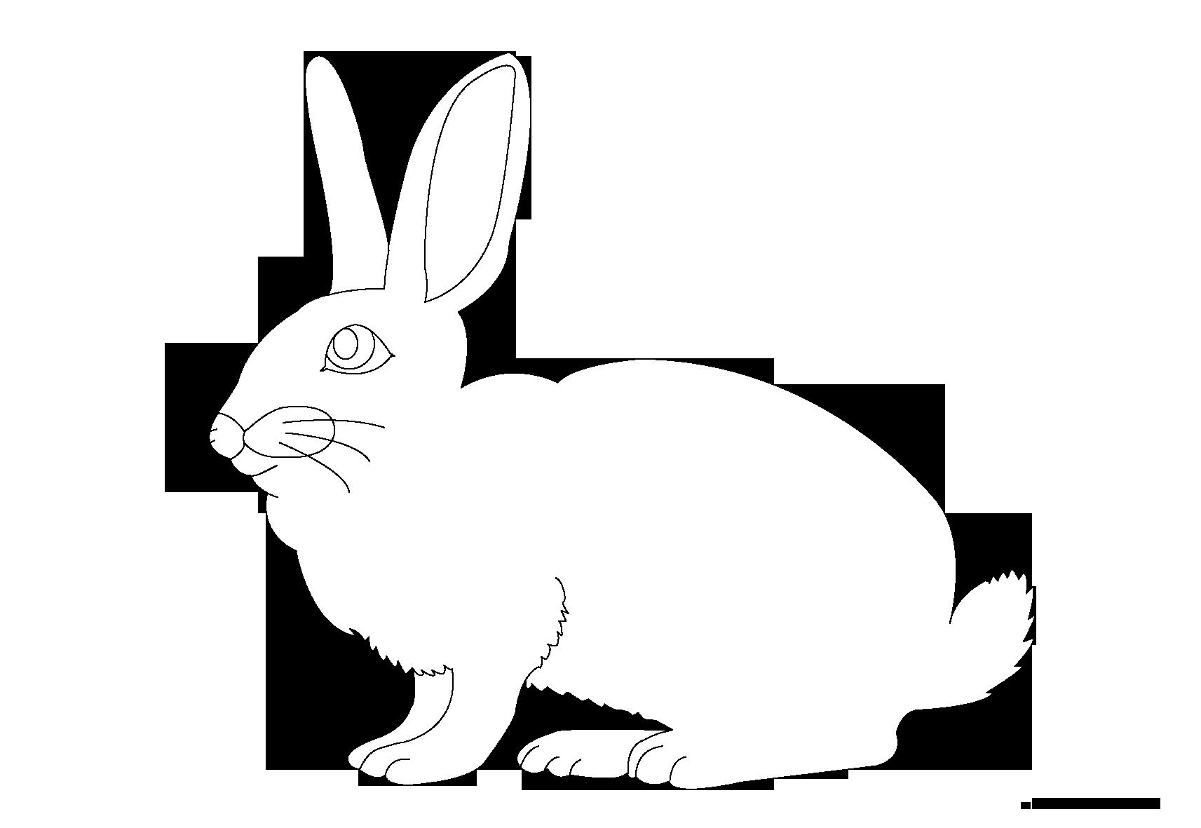 Clipart rabbit arctic hare. Coloring