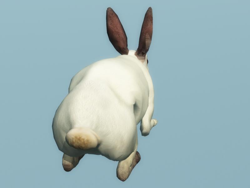 Rabbit back