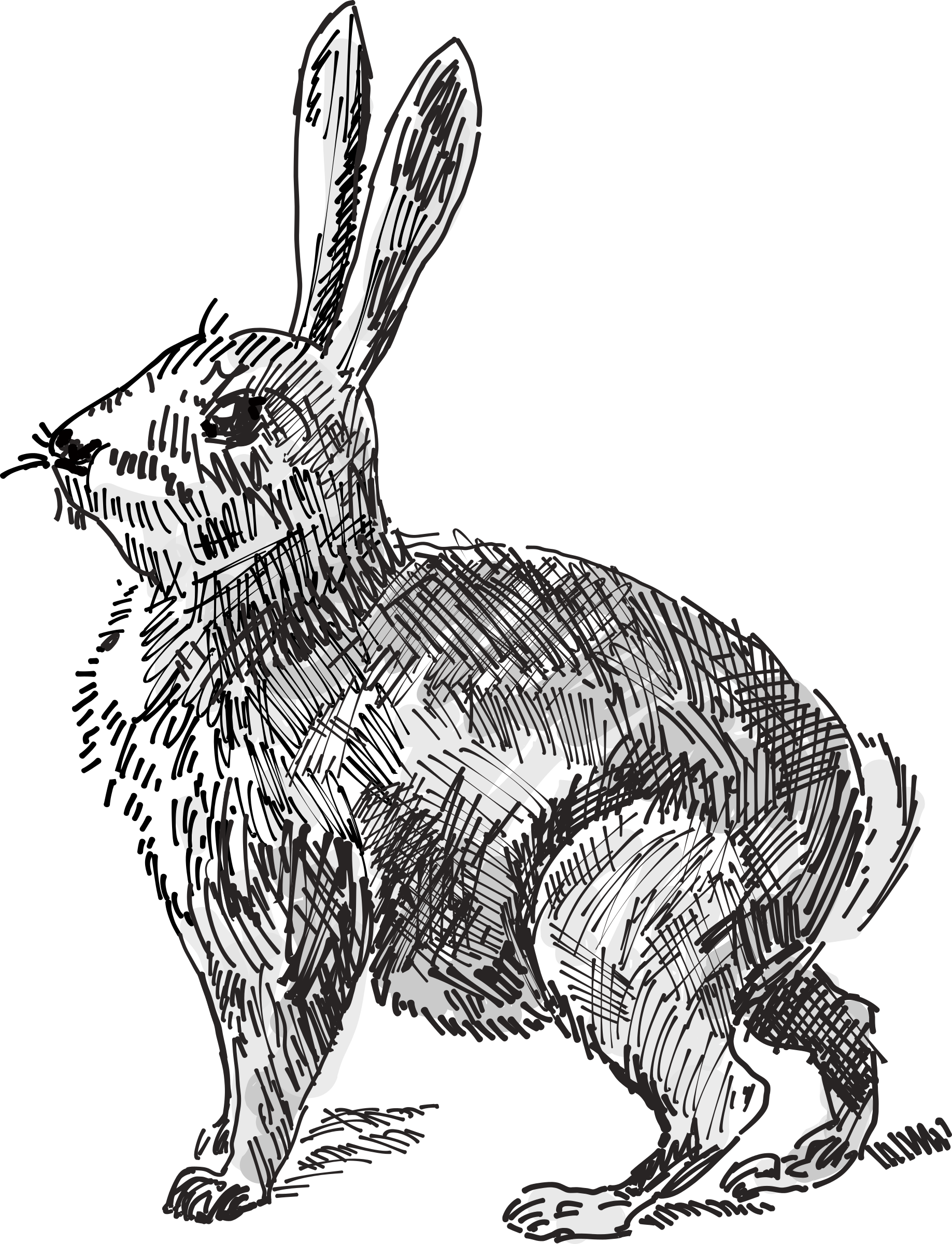Clipart Rabbit Sketch Clipart Rabbit Sketch Transparent Free For Download On Webstockreview 2020