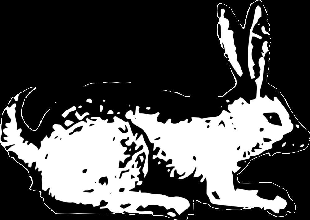 Clipart bunny snowshoe rabbit, Clipart bunny snowshoe rabbit Transparent  FREE for download on WebStockReview 2020