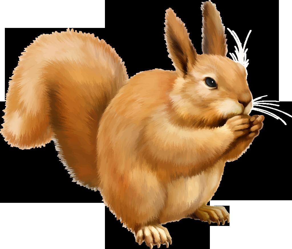 Png . Clipart squirrel rabbit