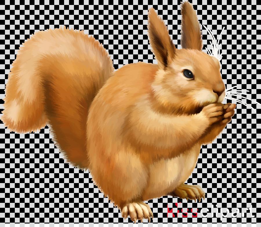 Chipmunk cartoon illustration transparent. Clipart squirrel rabbit