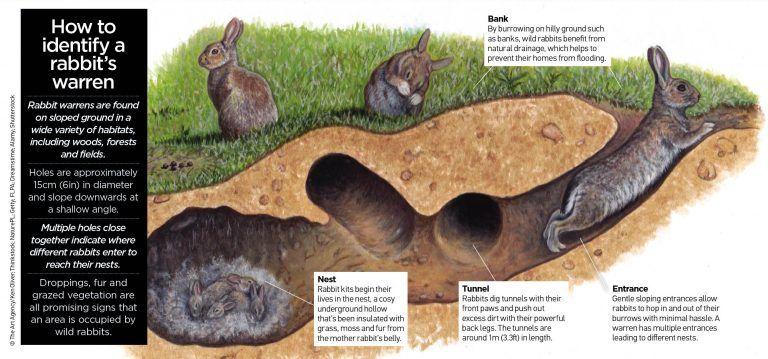 Warren and fox tattoo. Clipart rabbit underground