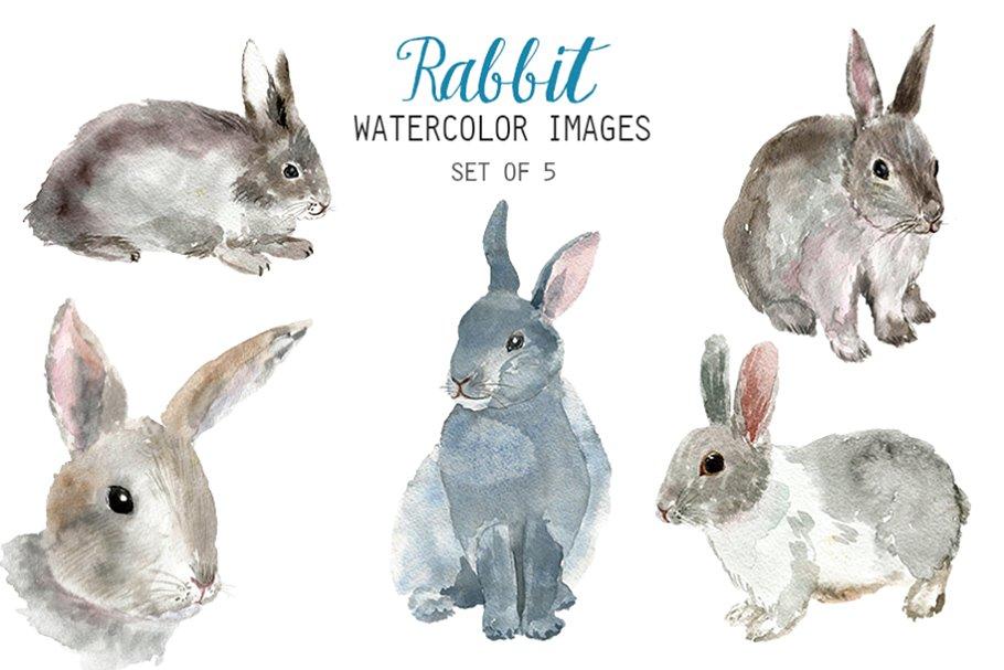 Illustrations creative market . Clipart rabbit watercolor