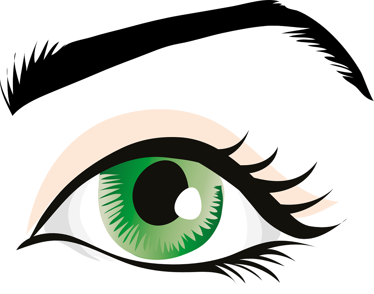 Eyeball clipart eyelash. Brows vokadeka all face