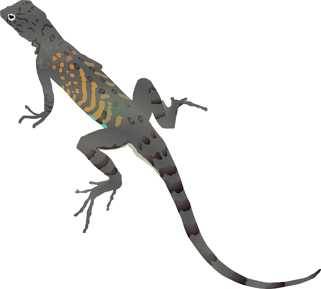 Lizard clipart iguana. Cartoon piranha african tribal