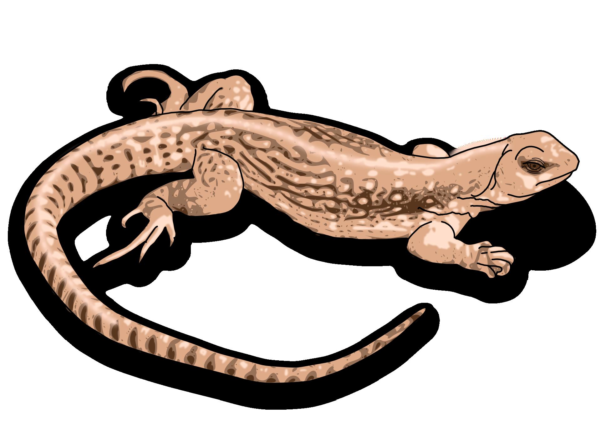 Clipartist net vector art. Gecko clipart house lizard