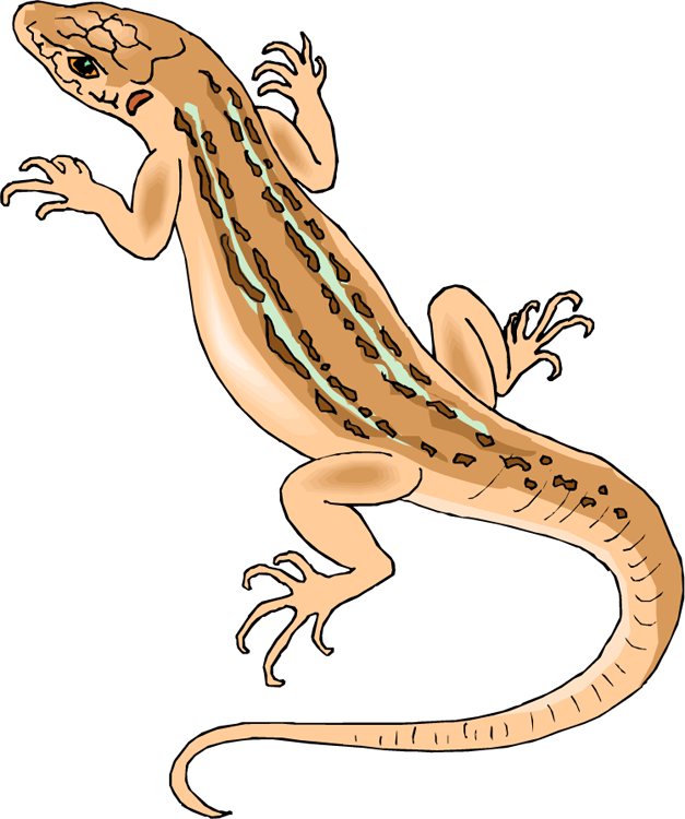 Explosion clipart cartoon house. Lizard free clip art